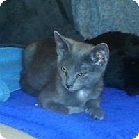 Adopt A Pet :: Sammie - Tampa, FL
