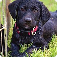 Adopt A Pet :: *Francine - PENDING - Westport, CT