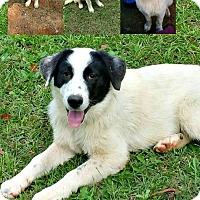 Adopt A Pet :: Lizzy meet me 10/3 - Manchester, CT