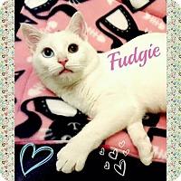 Adopt A Pet :: Fudgie - Harrisburg, NC