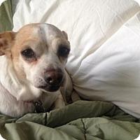 Adopt A Pet :: Puddles - Nashville, TN