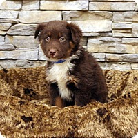 Adopt A Pet :: Ajax - Waldorf, MD