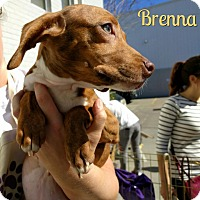 Adopt A Pet :: Brenna - Houston, TX