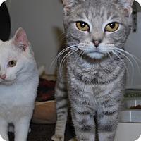 Adopt A Pet :: Juniper - New Castle, PA