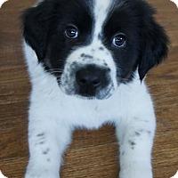 Adopt A Pet :: Kurt - Dayton, OH