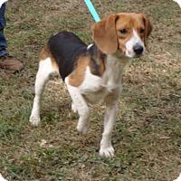 Adopt A Pet :: Eddie - Dumfries, VA