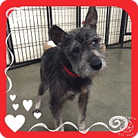 Adopt A Pet :: Lincoln - Sharonville, OH