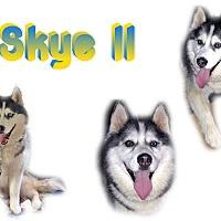 Adopt A Pet :: Skye II - Seminole, FL