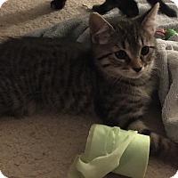 Adopt A Pet :: Loki - Sneads Ferry, NC