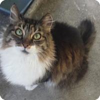 Adopt A Pet :: Troopa - Corona, CA