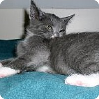 Adopt A Pet :: Frosty - Middletown, CT