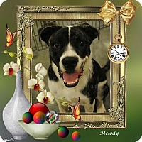 Adopt A Pet :: Melody - Crowley, LA
