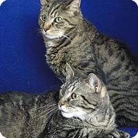 Adopt A Pet :: Gianna & Tony - Jackson, NJ