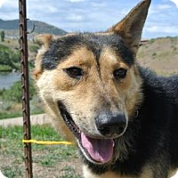 Adopt A Pet :: Tom - Durango, CO