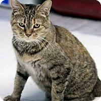 Adopt A Pet :: Hobbie - Batavia, OH