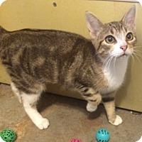 Adopt A Pet :: Praline - Madisonville, LA