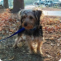 Adopt A Pet :: Charlie - Hagerstown, MD