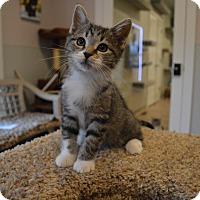 Adopt A Pet :: Earl - St. Charles, MO