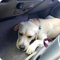 Adopt A Pet :: Sonny - Litchfield Park, AZ
