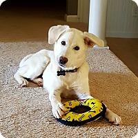 Adopt A Pet :: Wendy - Alpharetta, GA