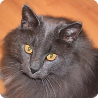 Adopt A Pet :: 3753 Smokey  - SO - Council Bluffs, IA