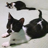 Adopt A Pet :: Mace & Mikey - Whitestone, NY