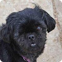 Adopt A Pet :: OLLY - Plano, TX