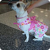 Adopt A Pet :: Cindy/Nugget - Vista, CA
