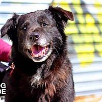 Adopt A Pet :: Kipper - Dearborn, MI