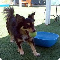 Adopt A Pet :: Mickey - Santa Ana, CA