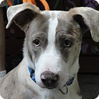 Adopt A Pet :: Jingles - Meridian, ID