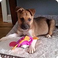 Adopt A Pet :: Cash - Natchitoches, LA