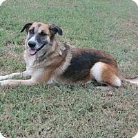 Adopt A Pet :: Opal - Lufkin, TX