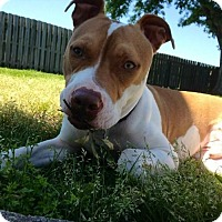 Adopt A Pet :: Reese - Baton Rouge, LA