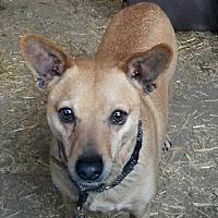 Adopt A Pet :: Dean - Templeton, CA