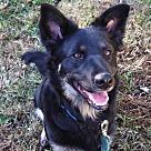 Adopt A Pet :: Maggie 4212