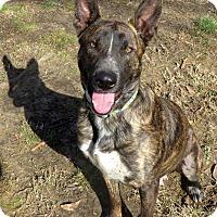 Adopt A Pet :: Freedom~ meet me! - Glastonbury, CT