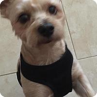 Adopt A Pet :: T-Bone - Ocean Ridge, FL