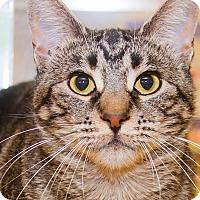 Adopt A Pet :: Natasha - Irvine, CA