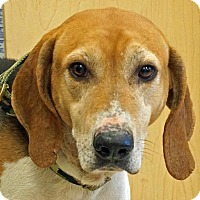 Adopt A Pet :: Hunter - Sprakers, NY