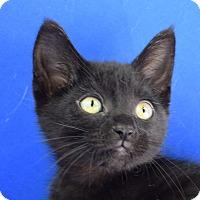Adopt A Pet :: Chuck - Carencro, LA