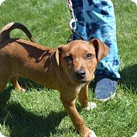Adopt A Pet :: Carl - Sparta, NJ