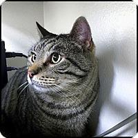 Adopt A Pet :: Vincent - Colorado Springs, CO