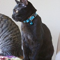 Adopt A Pet :: Zeke - Pink group - Orland, CA