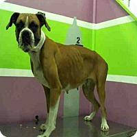Adopt A Pet :: Mabel Dee - Austin, TX