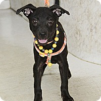 Adopt A Pet :: Isha Wong - Seattle, WA