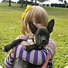 Adopt A Pet :: Amelia Earhart