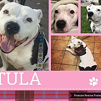 Adopt A Pet :: Tula - Channahon, IL