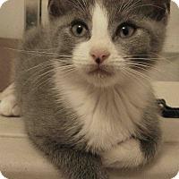 Adopt A Pet :: Claude - Cleveland, OH