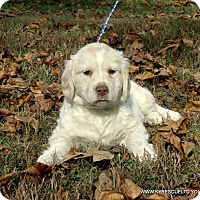 Adopt A Pet :: MIKEY/ADOPTED - PRINCETON, KY